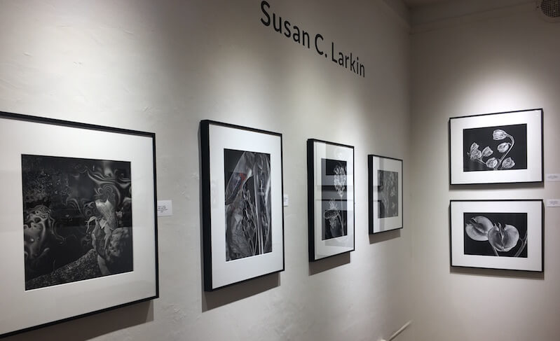 susangallery